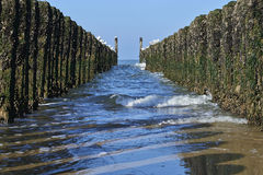 Between the two rows of poles of the breakwater Royalty Free Stock Image