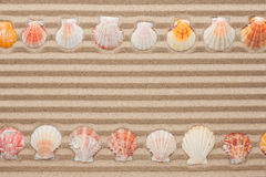 Two rows of sea shells lying on the sand Royalty Free Stock Images