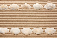 Two rows of sea shells lying on the sand Royalty Free Stock Photo