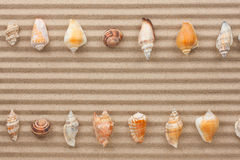 Two rows of sea shells lying on the sand Stock Photos
