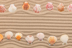 Two rows of seashells lying on the sand, with space for text. Royalty Free Stock Photography