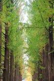 Two rows of trees lit at nami , korea Stock Photos