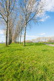 Two rows of trees on a sunny day in springtime Royalty Free Stock Photos