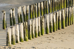 Two rows of white green groynes on a beach Royalty Free Stock Photo