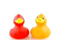 Two rubber ducks. On white background Stock Images