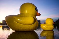 Two rubber ducks in Nong Prajak, Udon Thani,Thailand in evening stock photos