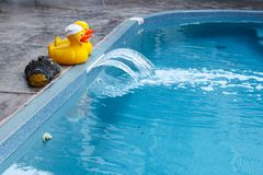 Two rubber ducks and a rubber crocodile head at edge of swimming pool stock photos