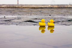 Two rubber ducks in the puddle royalty free stock photos
