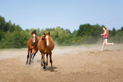 Two running horses Stock Photos