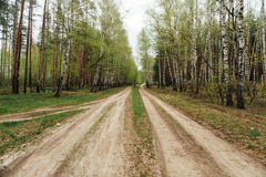 Two rural dirt road. Through a forest royalty free stock photos
