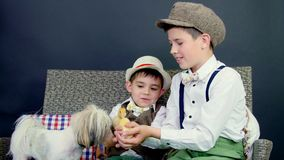 Two rustic, stylishly dressed boys play with ducklings, chickens, and a small dog. In the background a haystack, colored stock video