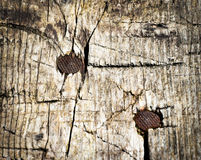 Two rusty nails in wood Stock Photography