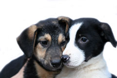 Two Sad Dogs Royalty Free Stock Photo
