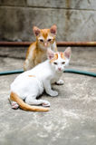 Two Sad Kittens Stock Photography