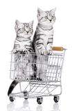 Two sad little kitten in shopping card Stock Photo