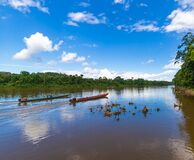 Free Two Safari Boats Sailing Amidst Suriname Jungle Royalty Free Stock Photo - 182043795