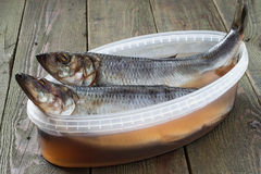 Two salted herring in a container with brine Royalty Free Stock Image