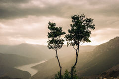 Two saplings in front of an lake on a cloudy and rainy day. Kozjak, Macedonia. Canyon and rocky mountains landscape. Cloudy sunset stock photography