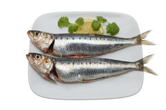 Two sardines Royalty Free Stock Image