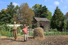Two Scarecrows. In the vegetable garden Royalty Free Stock Image