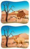 Two scenes of camel in desert. Illustration Stock Images