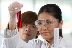 Two scientists analyzing solution. Stock Image