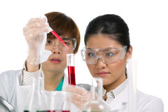 Two scientists analyzing solution. Royalty Free Stock Images