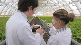 Two scientists discuss and liken leaf of plant with samples of cultures in tube. Man engineer holds tablet in hands. stock footage