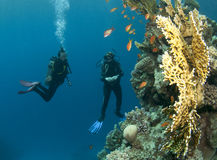 Two scuba divers Royalty Free Stock Image