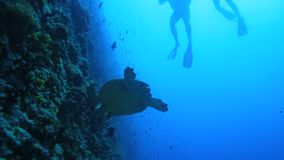 Two scuba divers close to coral reef stock video footage