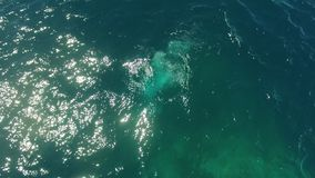 Two scuba divers dive into the ocean. A shot of two scuba divers under the blue water. Bubbles created by their oxygen tanks are seen stock footage