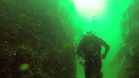 Two scuba divers swimming stock footage