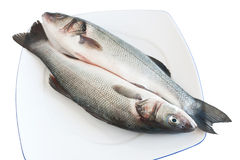 Two sea bass Stock Photos
