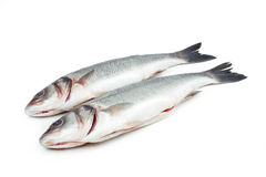 Two sea bass fish Royalty Free Stock Photography