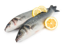 Two sea bass with lemon Stock Photo