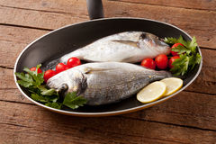 Two sea bream Stock Photos