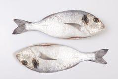 Two sea breams fish Stock Photos
