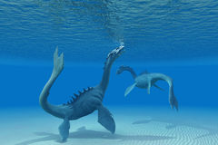 Two Sea Dragons. A Sea Dragon goes up to the ocean surface for a breath of air Royalty Free Stock Photos