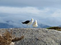 Two sea gulls on a rock Royalty Free Stock Image