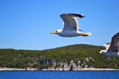 Two sea-gulls with wings wide spread are flying over water. stock photography