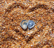 Two sea-shells on the beach Royalty Free Stock Photo