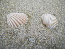 Two sea shells lie on the sand and washed by the water of the Gulf of Siam. Stock Photo