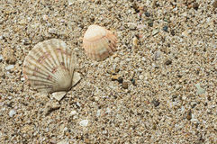 Two sea shells on sand Stock Photos