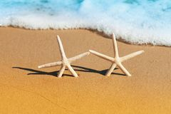 Two sea star or starfish on seashore in summer day. Two sea star or starfish on seashore in sunny day Royalty Free Stock Images