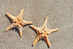 Two sea-stars on sand beach background Royalty Free Stock Image
