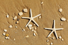 Two sea stars or starfish on sandy beach top view. Royalty Free Stock Images