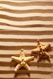 Two sea stars. Stock Image