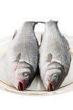 Two Seabass Fish On A Plate. Two seabass fish on a white plate on a white background Royalty Free Stock Image