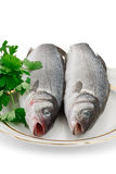 Two Seabass Fish On A Plate. Two seabass fish on a white plate on a white background Stock Photo