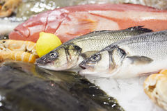 Two seabasses and other seafood Royalty Free Stock Images